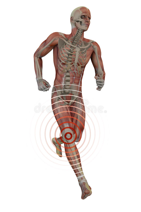 Man running with knee pain, skeleton and muscles stock illustration