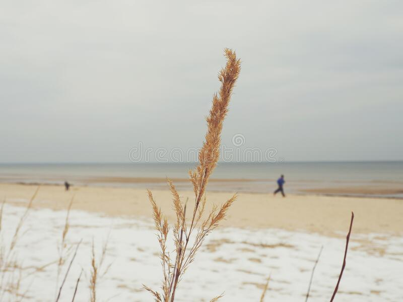 Man Running Near The Sea Shore During Day Time Free Public Domain Cc0 Image