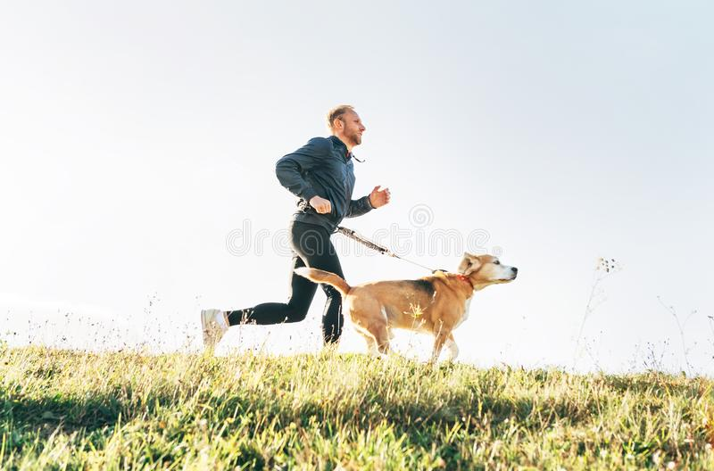 Man runs with his beagle dog. Morning Canicross exercise concept image stock images