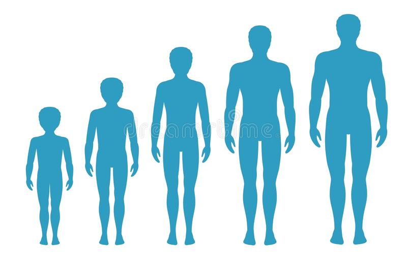 Man`s body proportions changing with age. Boy`s body growth stages. Vector illustration. Aging concept. Different man`s age royalty free illustration
