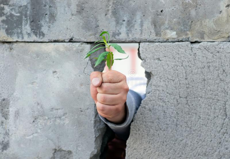 A man`s hand, clenched into a fist, breaks through a wall of gray concrete blocks and releases a young green tree sprout. Symbol royalty free stock image