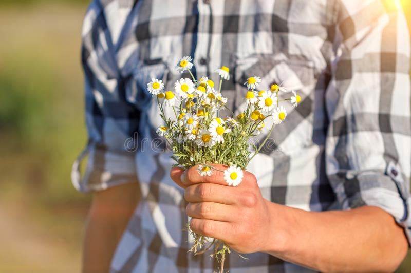 Man`s hand holding a bouquet of daisies, the concept of relationship and love royalty free stock photography