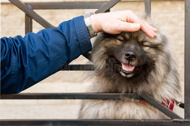 A man`s hand strokes the dog`s head, looking through the bars. stock photography
