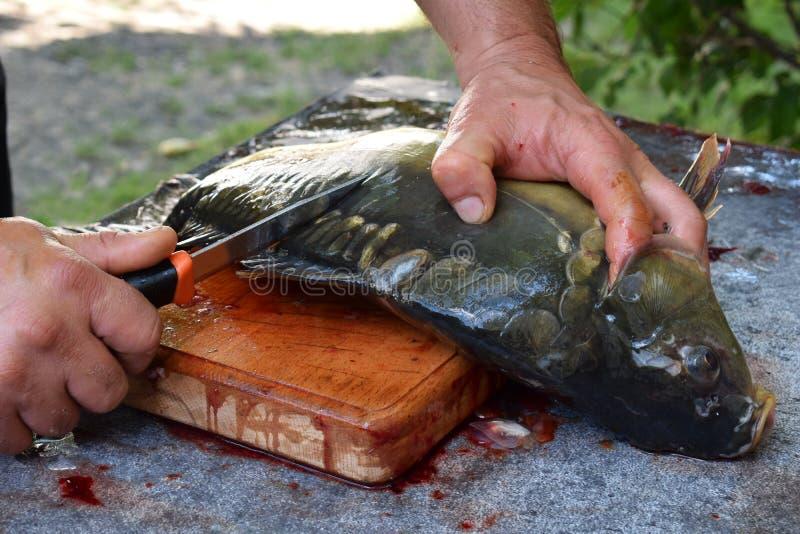 Man& x27; s handen die en ruwe vissen met een mes op een lijst snijden schoonmaken Grote spiegelkarper Het voorbereiden van verse royalty-vrije stock fotografie
