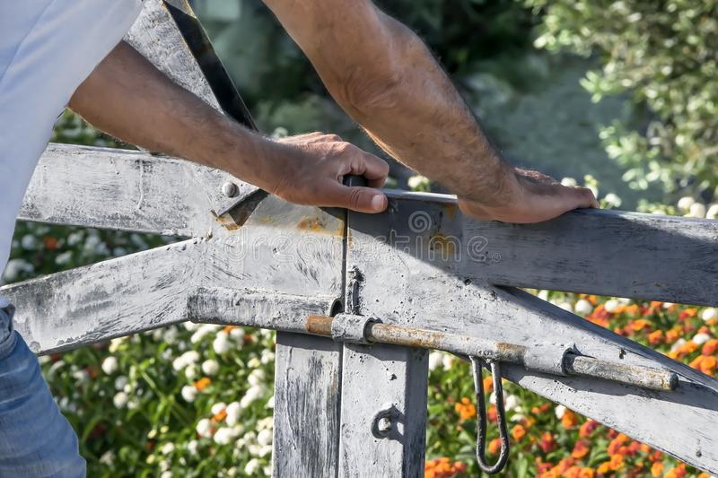 Man`s hands opening or closing Rustic wooden gate of courtyard blooming garden. Summer day floral background stock photos