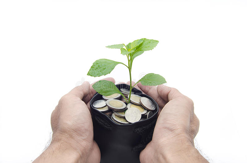 Man's hands protecting the plant. Man's hands protecting the money plant royalty free stock image