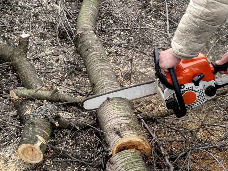 Man`s hands sawing a cherry tree with chainsaw. The concept of spring and autumn cleaning and rejuvenation of fruit trees in the. Garden, background with copy stock photography