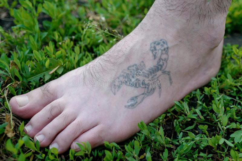 The man`s leg with a tattoo of a scorpion. In grass stock images