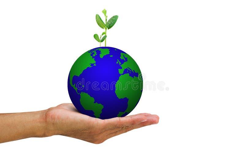 Man& x27; s ręki mienia dorośnięcia zieleń kiełkuje od kuli ziemskiej na białym tle zdjęcia stock
