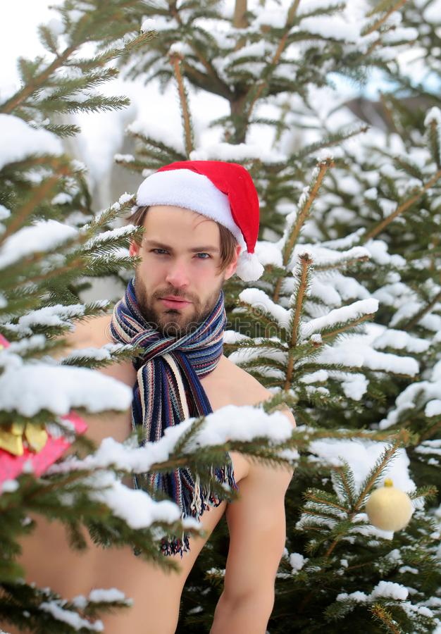 Man in santa hat and scarf on naked torso standing. In snow forest on winter day. Healthy lifestyle concept. Christmas, new year, holidays celebration royalty free stock photos