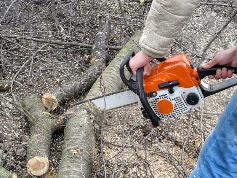 A man sawing a cherry tree trunk on the ground. Male hands hold a chainsaw, the tree trunk is cut into logs, and sawdust around,. Background with copy space royalty free stock image