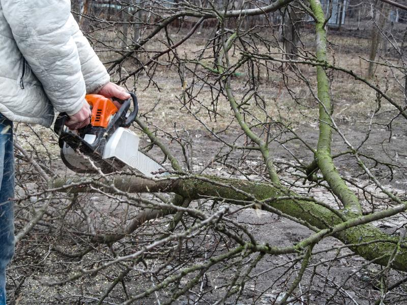 A man sawing a fallen branch of a fruit tree with chainsaw. The concept of cleaning and rejuvenation of the garden in autumn and. Spring, background with copy royalty free stock photography