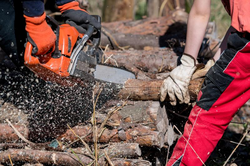 Man saws firewood with a red chainsaw royalty free stock images