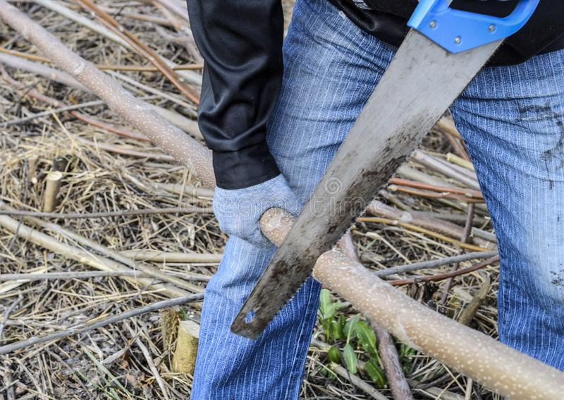 man saws sawing tree branch. Wood sawing with a hand saw royalty free stock photography