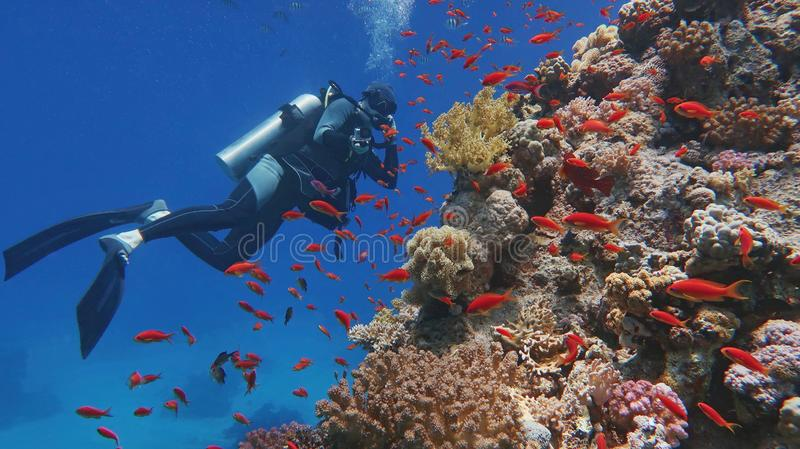 Man scuba diver admiring beautiful colorful tropical coral reef. Man scuba diver admiring beautiful colorful coral reef stock photography