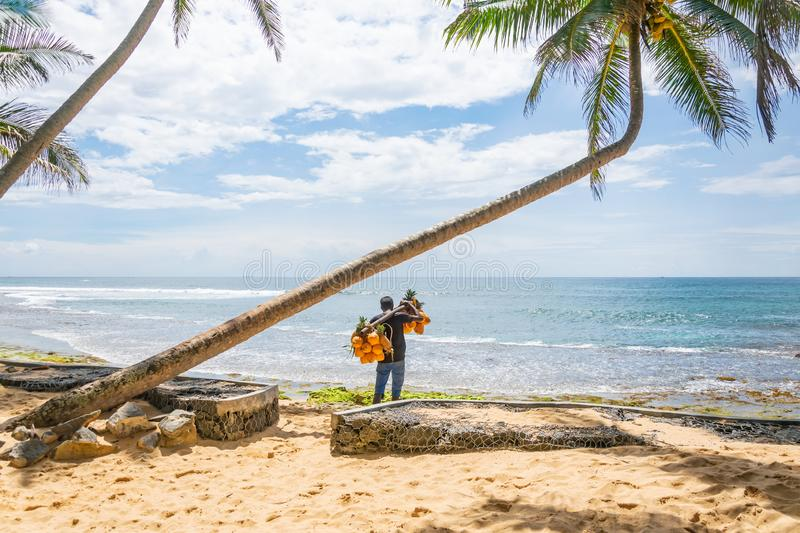 A man selling coconuts and pineapples on the beach, Hikkaduwa, Sri Lank.  stock images