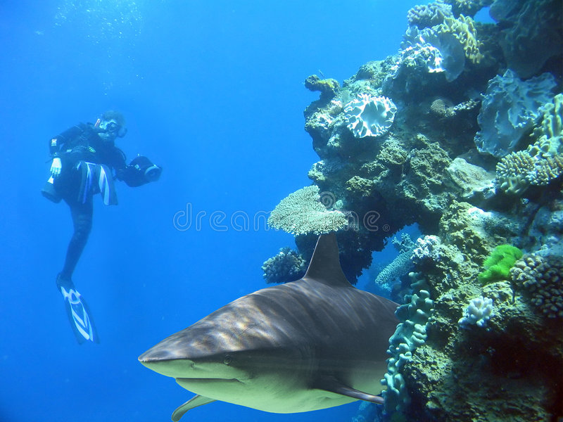 Man&Shark. Diver with camera with shark in reef