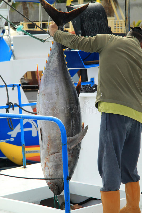 Man shows large tuna fish stock photography