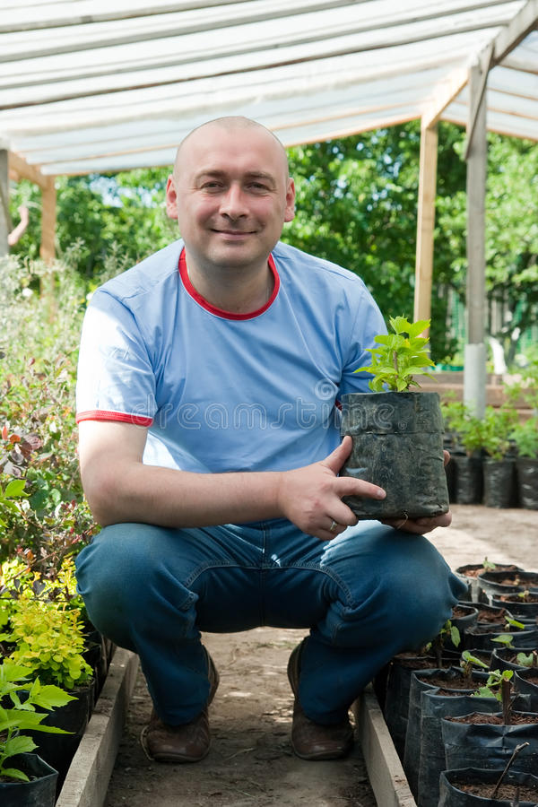 Man with shrubs seedlings stock photos