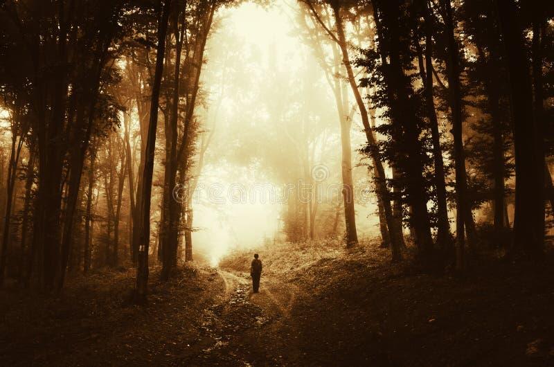 Man silhouette in dark woods. Man silhouette in dark mysterious woods on Halloween. Man walking in haunted woods with mysterious light on Halloween evening stock image