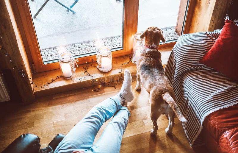 Man sitting in comfortable chair opposite big window in cozy country home and his beagle dog watching in wide window. Countryside stock photo