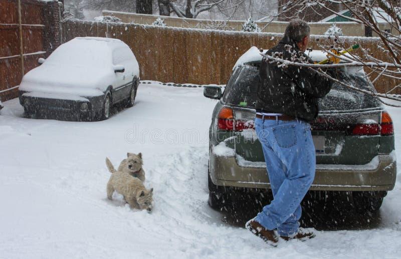 Man skrapande is från bilen med två Westie hundkapplöpning som ser på i tung snö royaltyfria bilder