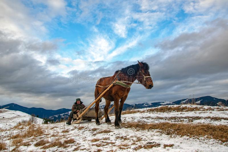 Man with sledge pulled by horse outdoor in winter. Scape of authentic rural life royalty free stock image