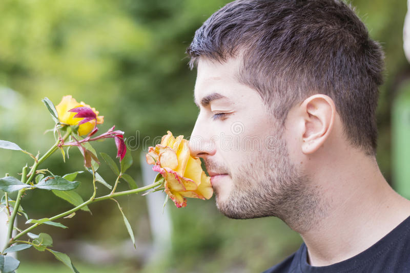 Man smelling a rose. Young man smelling yellow rose outdoor royalty free stock images