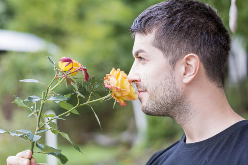 Man smelling a rose. Young man smelling yellow rose outdoor stock image