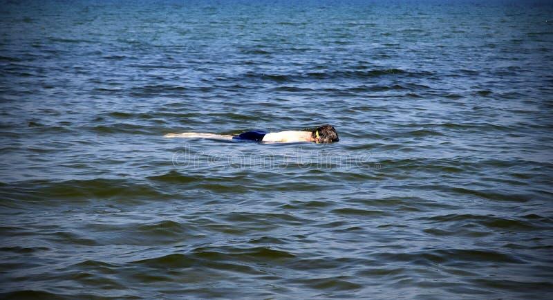 Man Snorkeling royalty free stock images