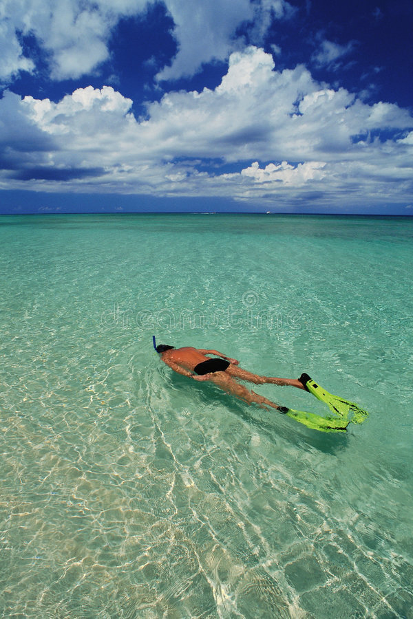 Man is snorkeling royalty free stock images
