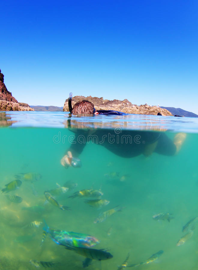 Download Man Snorkeling In Sea With Tropical Fish Stock Photo - Image: 33856350