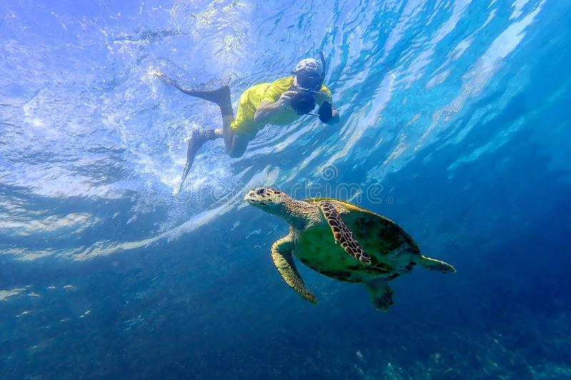 Man snorkeling with sea turtle in the tropical water of Maldives stock photography