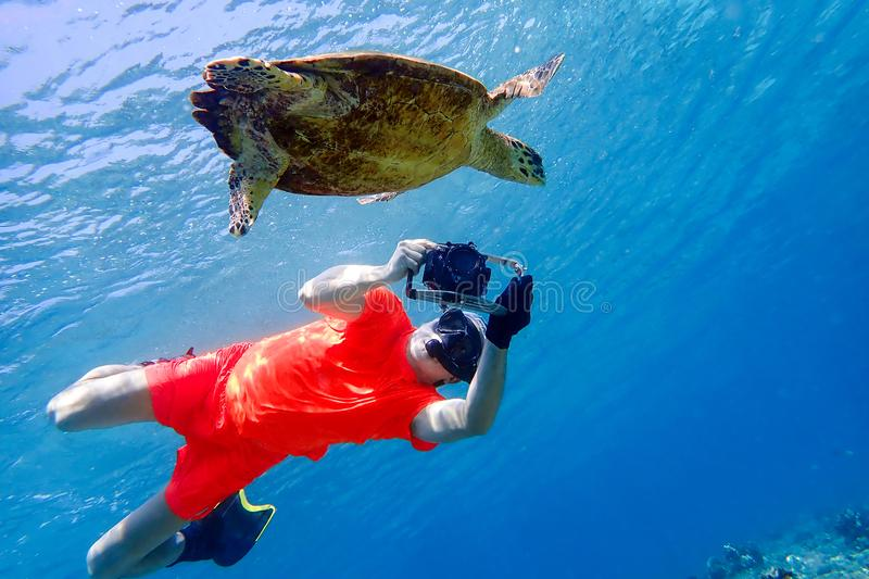 Man snorkeling with sea turtle in the tropical water of Maldives. Man snorkeling and take pictures sea turtle in the tropical water of Maldives royalty free stock image