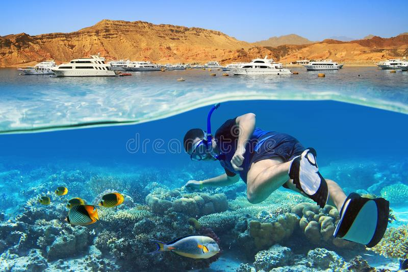 Snorkeling in the tropical water of Red Sea. Man at snorkeling in the tropical water of Red Sea in Egypt royalty free stock photography