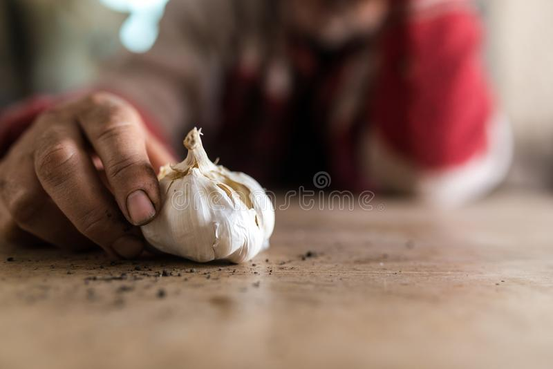 Man with soiled hands holding a fresh garlic bulb. With scattered earth on a rustic wooden table in a close up low angle view royalty free stock photography