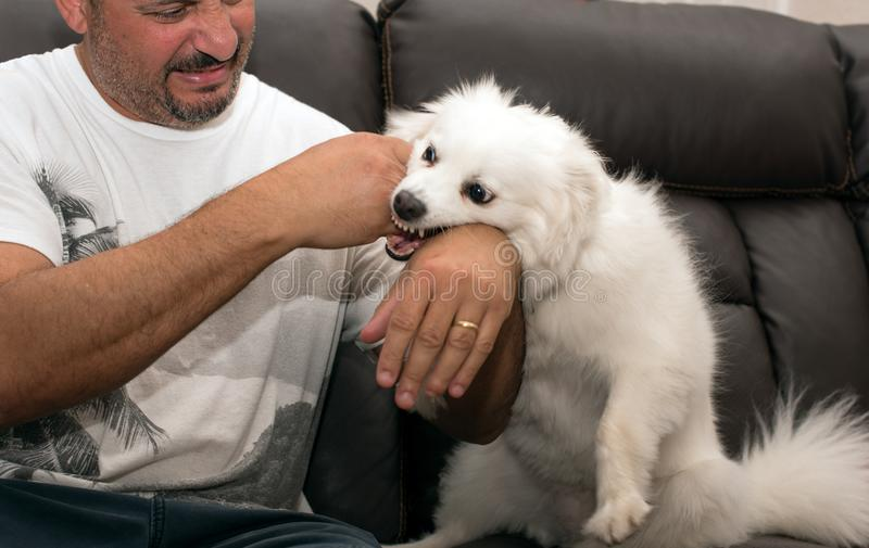 Man som är bit vid hunden fotografering för bildbyråer
