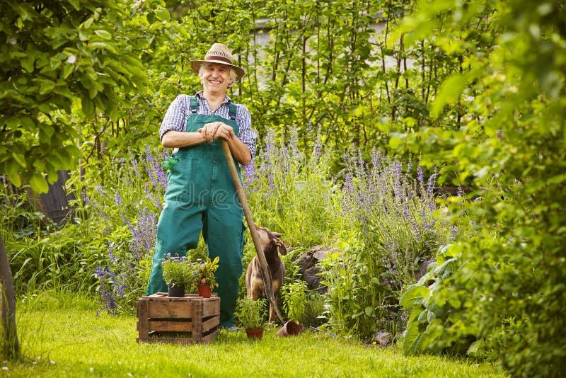 Man som arbeta i trädgården att skratta royaltyfri fotografi