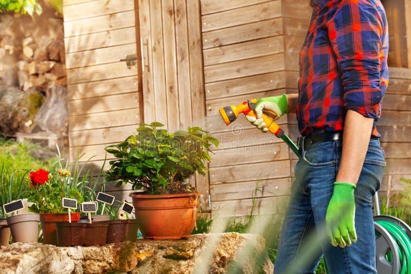 Man som bevattnar växter genom att använda handspridaren utomhus royaltyfri foto