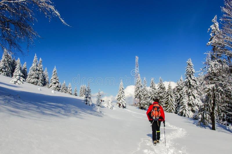 Man som fotvandrar i Carpathian berg arkivbilder