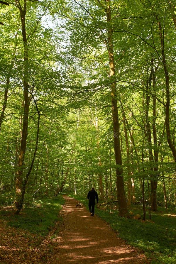 Man som går hunden i skogen arkivbild