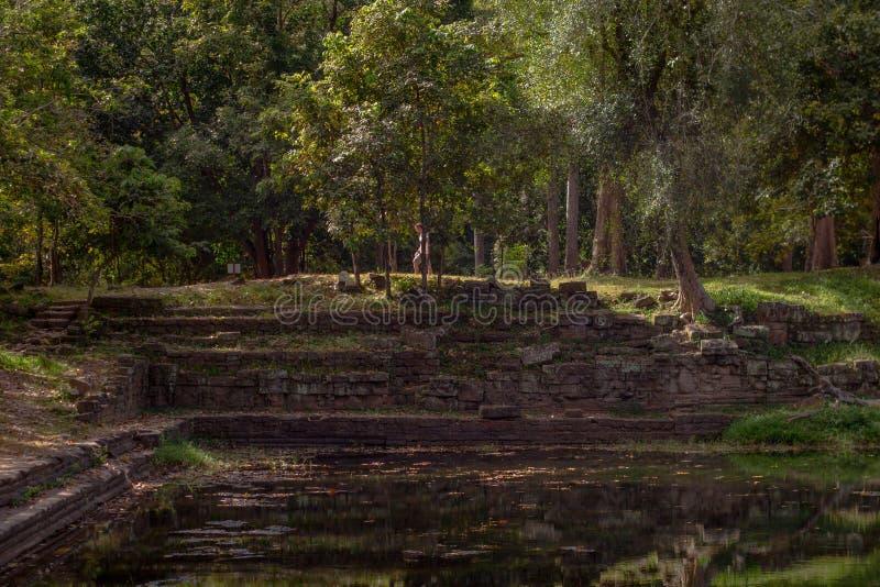 Man som går i djungeln vid en forntida pöl i Angkor Thom, Cambodja arkivbilder