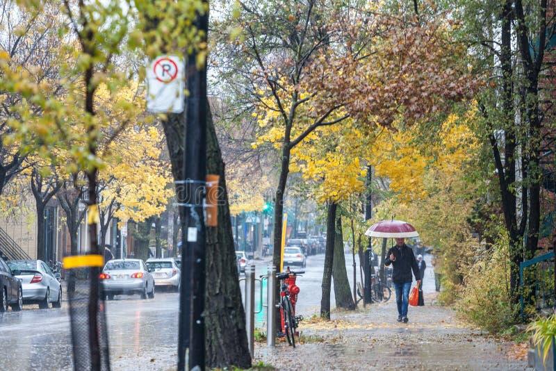 Man som går med ett paraply under en regnig hösteftermiddag i en gata av le Platå, en bostads- distrct av Montreal, Quebec arkivbild
