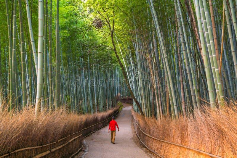 Man som går till och med bambuskog på Sagano, Arashiyama, Kyoto fotografering för bildbyråer