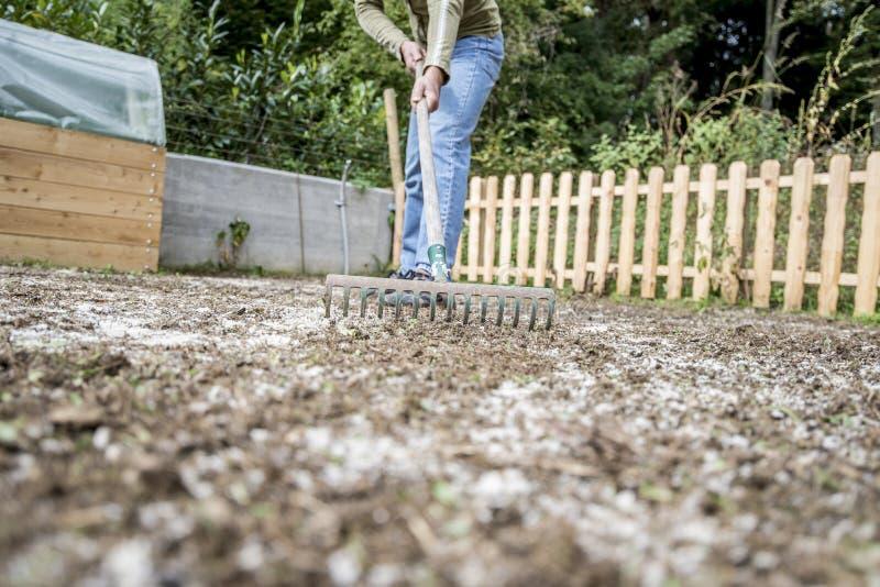 Man som gör gårdarbete som krattar jordningen fotografering för bildbyråer