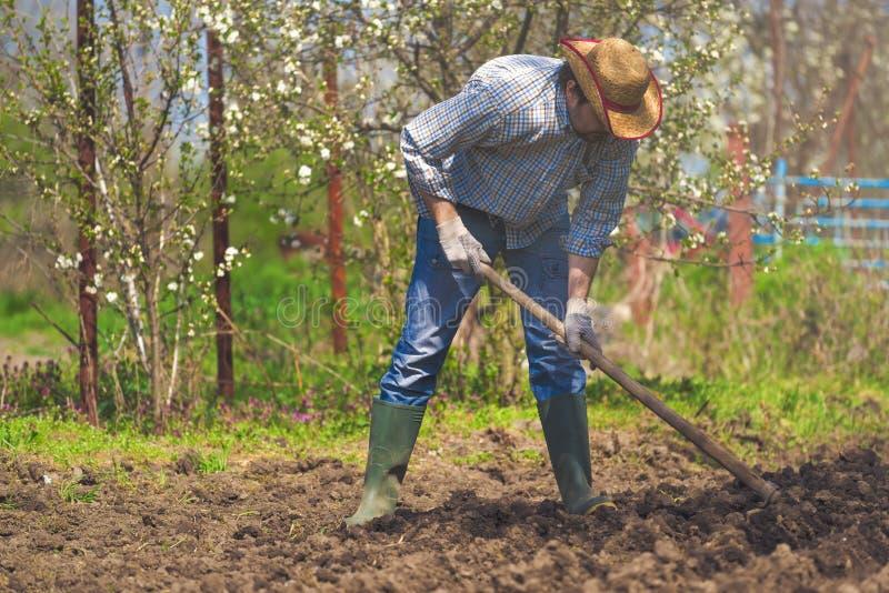Man som hackar jord för grönsakträdgård royaltyfri foto