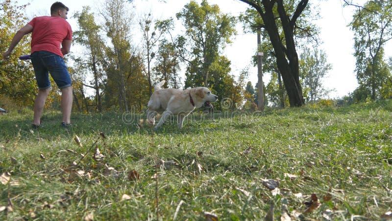 Man som kastar pinnen eller leksaken för djuret för hans hundkapplöpning Labrador eller golden retriever som går att hämta träpin arkivfoto