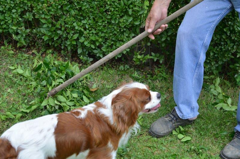 Man som krattar med företaget av hans hund royaltyfri bild