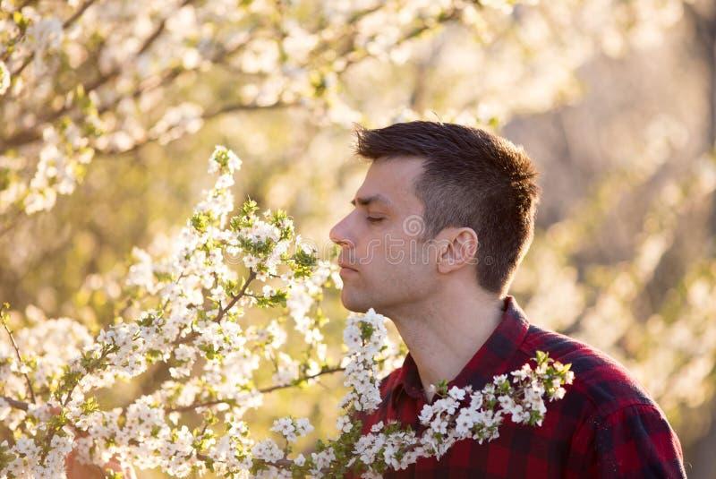 Man som luktar blomningen av fruktträdet arkivbild