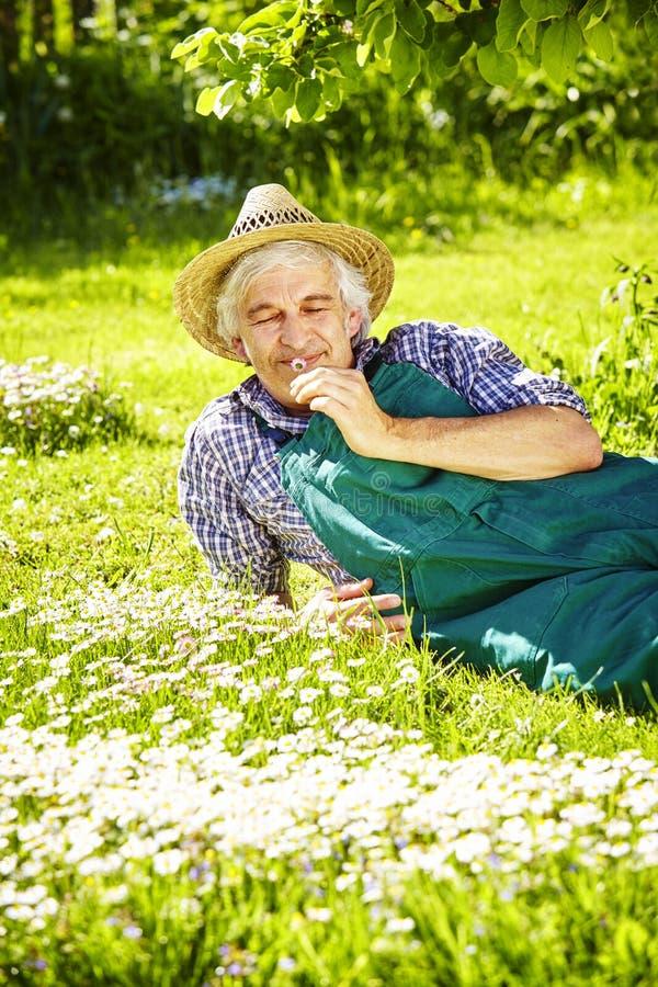 Man som luktar tusenskönaträdgården royaltyfri bild